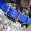Close Up Ruger wearing his Coastal Pet Double Ply Standard Nylon Dog Collar Personalized (2901E) Blue BLU