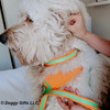 hamilton wearing coastal pet pro reflective personalized collar and leash close up