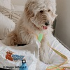 hamilton looks handsome in his coastal pet pro reflective leash collar and harness