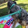Nessie Personalized harness with collar and leash