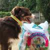 Aspen looks so handsome in his Coastal Pet Pro Reflective dog collar