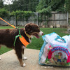 Aspen is ready for a walk wearing his Coastal Pet Pro Reflective leash with matching harness and collar