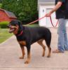 Coastal Pet Insta Grip Control Handle Nylon Dog Leash Red Walking On Dog