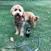 Sammy wearing K9 Exlorer Harness and Rope Leash in park