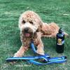 Sammy and Coastal Pet K9 Explorer Leash