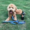 Sammy and K9 Explorer Reflective Dog Leash