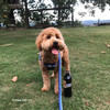 Sammy looking great in his K9 Explorer Reflective Dog Leash and Collar