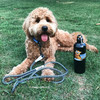 Sammy wearing Coastal Pet K9 Explorer Rope Leash and Collar