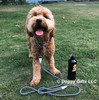 Sammy wearing K9 Exlorer Collar and Rope Leash