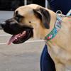 Coastal Pet Sublime Adjustable Dog Collar