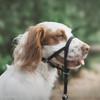 Coastal Pet Walk 'n Train ! Dog Head Halter (6100) on dog