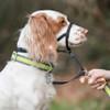 Coastal Pet Walk 'n Train ! Dog Head Halter (6100) dog wearing