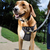 Coastal Pet Walk Right ! Front-Connect Padded Dog Harness On Dog
