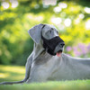 Coastal Pet Best Fit Adjustable Comfort Dog Muzzle
