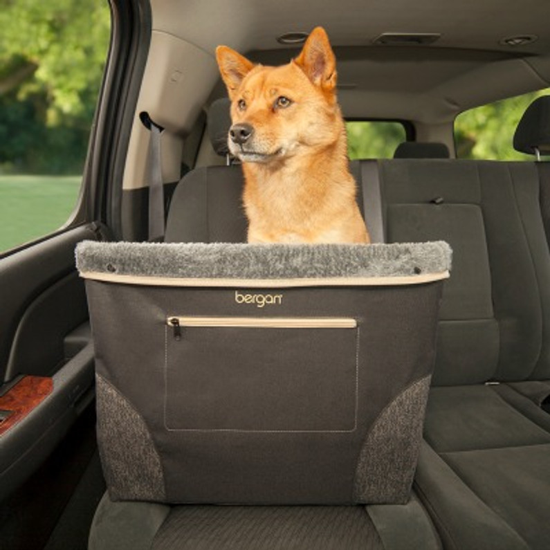 Safe Travels Together With Your Furry Friend