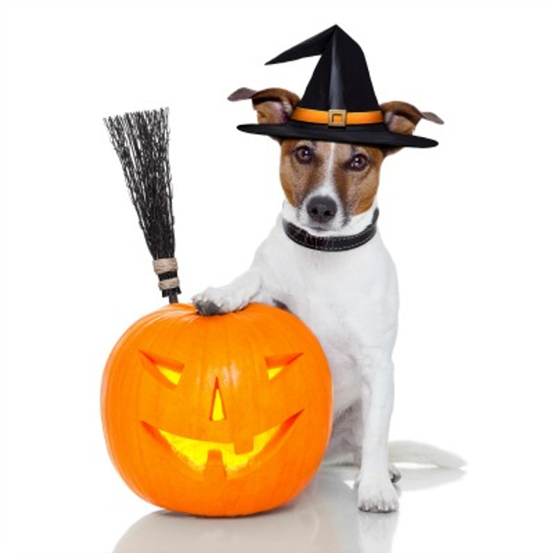 Let Your Furry Friend Join The Halloween Fun