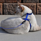 Cat Collars, Leash + Harness