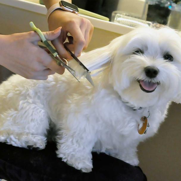 Safari® Dog Safety Scissors