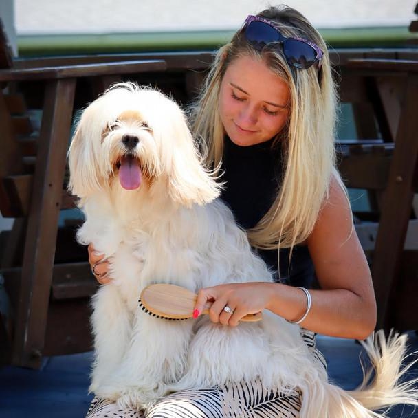 Safari® Bristle Dog Brush with Bamboo Handle on dog
