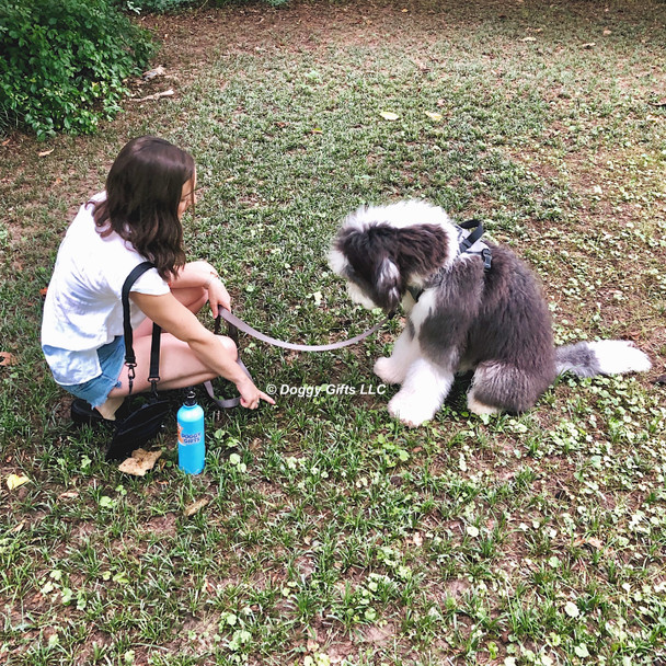 Henrythesheepadoodle loves training time with his mom