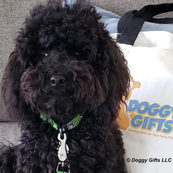 Bo wearing K9 Explorer Brights Reflective Dog Collar