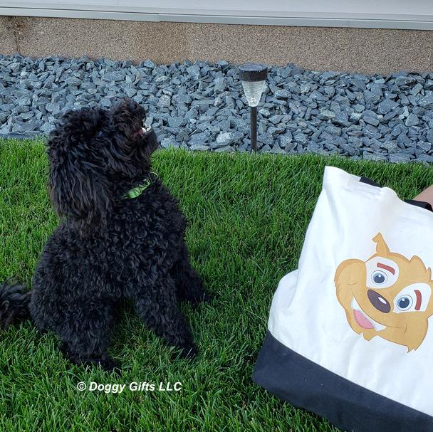 Bo wearing K9 Explorer Brights Dog Collar