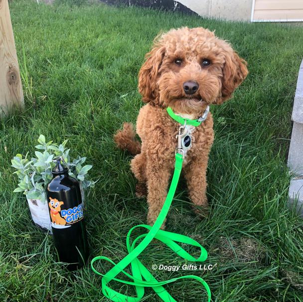 Kona wearing Pro Waterproof Dog Collar and Leash in lime