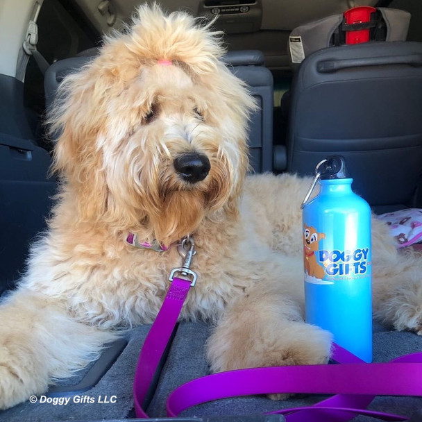 Lilly loves car rides and is wearing Coastal Pet Pro Waterproof Adjustable Collar and Leash in Purple