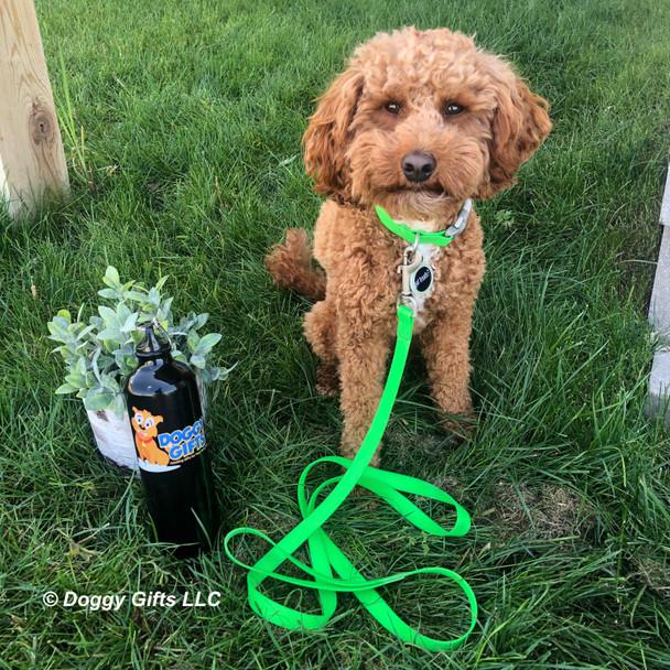 Kona looks adorable in his coastal pet pro waterproof leash and collar
