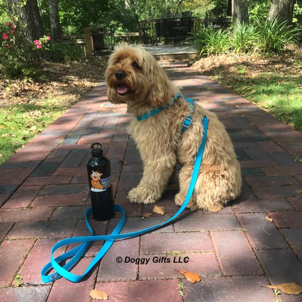 Miller looks handsome in his coastal pet pro waterproof leash and collar