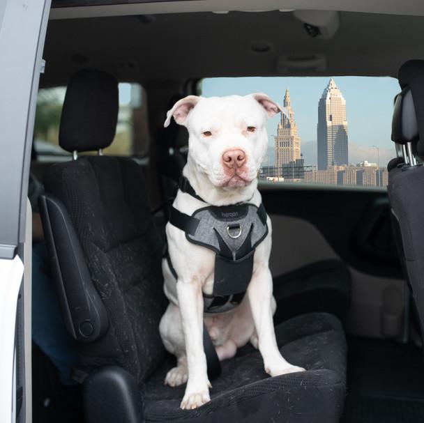 Bergan® Auto Harness (88200) size large dog