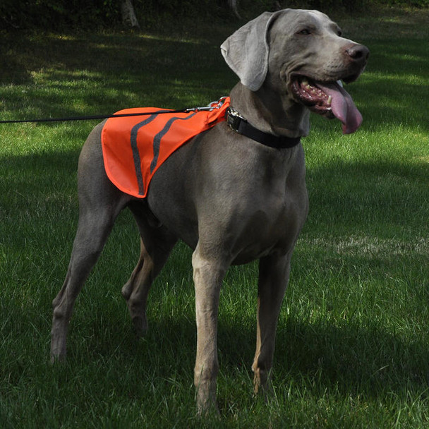 Coastal Pet Reflective Safety Vest On Dog Evening