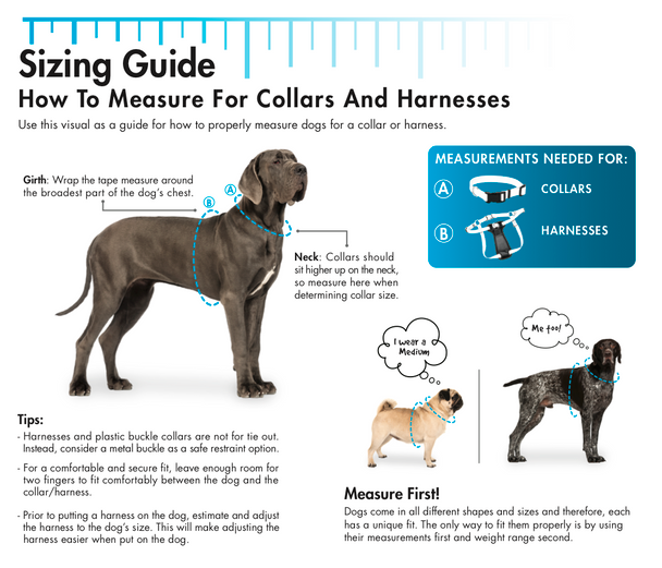 Coastal Pet Single Ply Standard Nylon Dog Collar Personalized Sizing Information