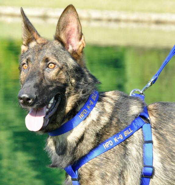 Coastal Pet Single Ply Standard Nylon Dog Collar Personalized Blue BLU