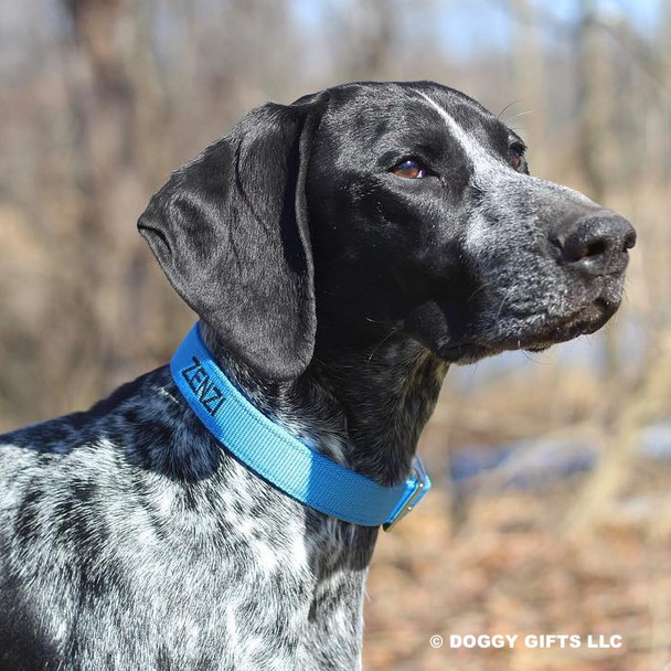 Zenzi looks beautiful in her Coastal Pet Standard Nylon Dog Collar Personalized (00301E) Blue Lagoon BLL