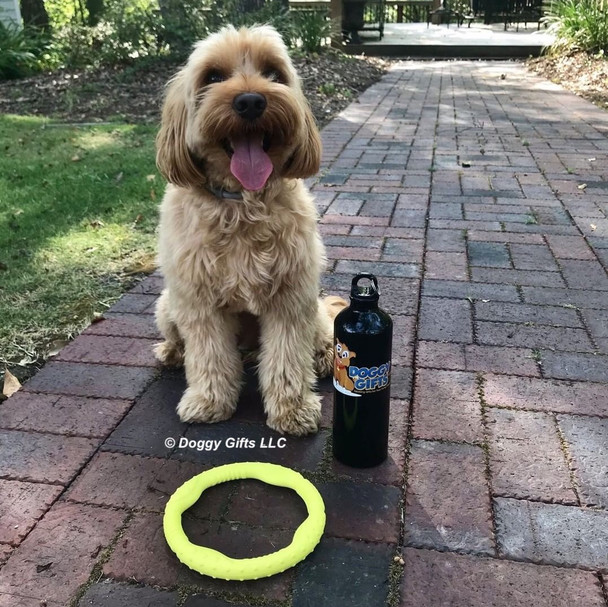 Miller loves his Coastal Pet Pro Fit Mini Ring Dog Toy