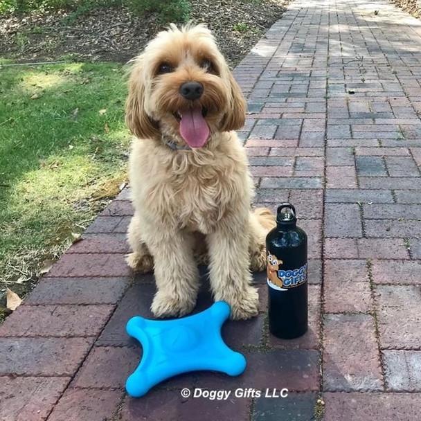 Miller loves his Pro Fit Flying Jack Dog Toy