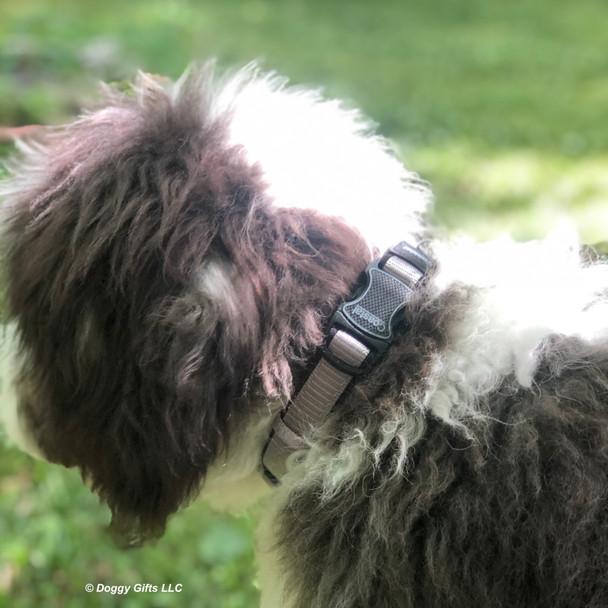 Henrythesheepadoodle looks handsome in his Coastal Pet Inspire Collar Details