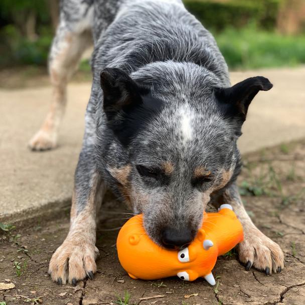 Dog playing with Rascals® Grunt Dog Toy Big Head Bull