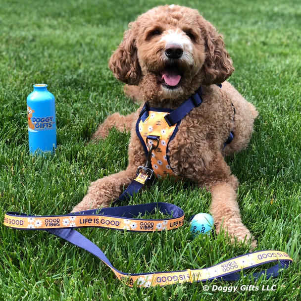 Charley Girl Plays Fetch with her Life Is Good dog toys from doggygifts