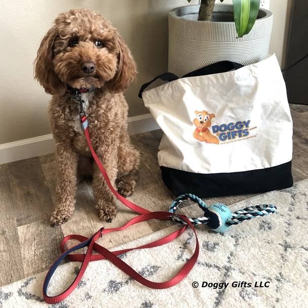 Kona handsome in Life Is Good® Padded Leash and Collar With Rope Toy