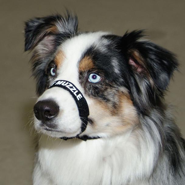 Coastal Pet Adjustable Comfort Muzzle For Dogs Shop Online