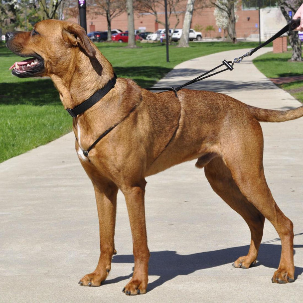 Holt® Control Dog Harness (6033) helps teach your dog to walk nicely