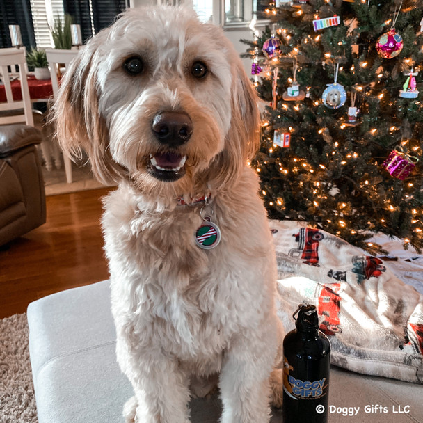 Mylo wearing Dog Tag Art Christmas Bone Tag