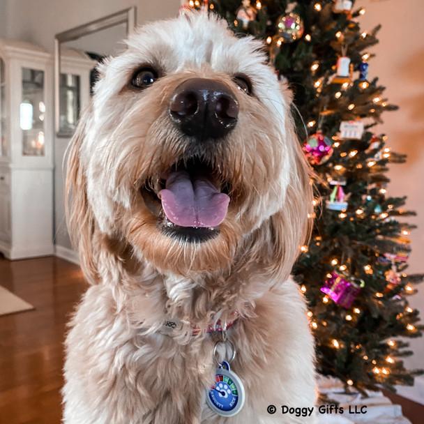 Mylo wearing Dog Tag Art Christmas Naughty Meter Dog Tag