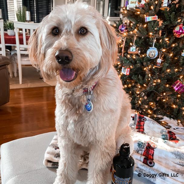Mylo wearing Dog Tag Art Christmas Naughty Meter Tag