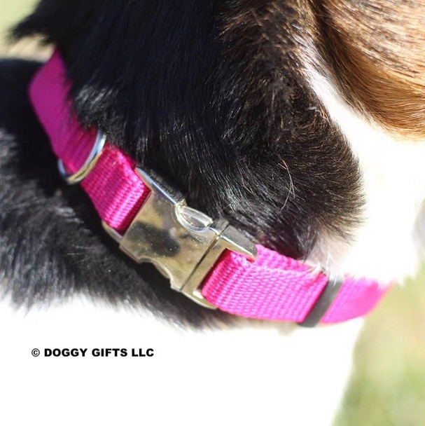 Dixie wearing Coastal Pet Metal Buckle Nylon Dog Collar PKF Pink Flamingo