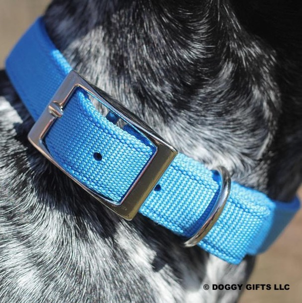 Close up Coastal Pet Double Ply Standard Nylon Dog Collar (2901) Blue Lagoon BLL