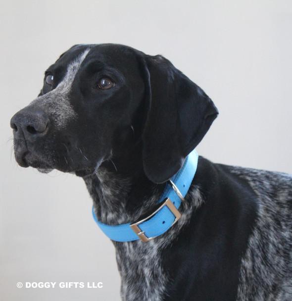 Zenzi looks awesome in her Coastal Pet Double Ply Standard Nylon Dog Collar (2901) Blue Lagoon BLL