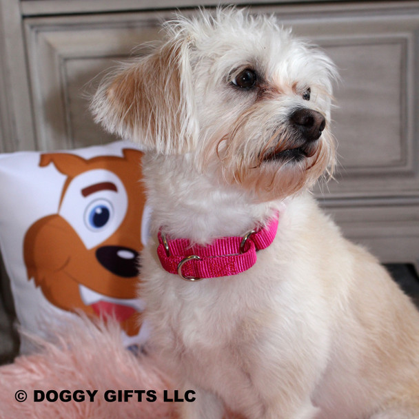 Sweet Mia loves her Coastal Pet Martingale Adjustable Nylon Dog Collar (6407) Pink Flamingo PKF
